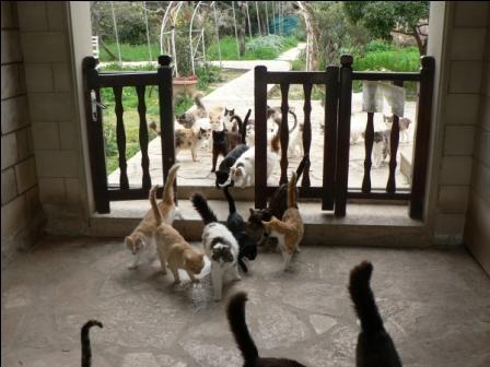 индивидуальные экскурсии в кошачий монастырь Святого Николая