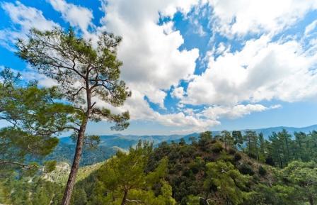 гора Олимп Троодос