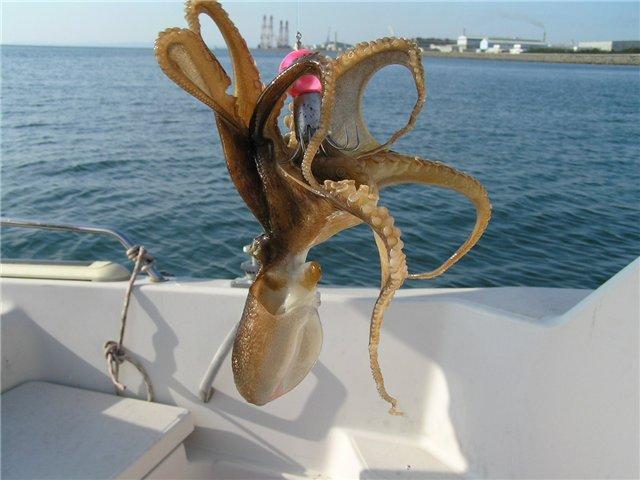 экскурсия ловля осьминогов на Кипре