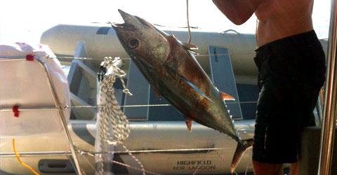 морская рыбалка на Кипре на тунца