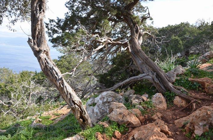 Акамас Кипр
