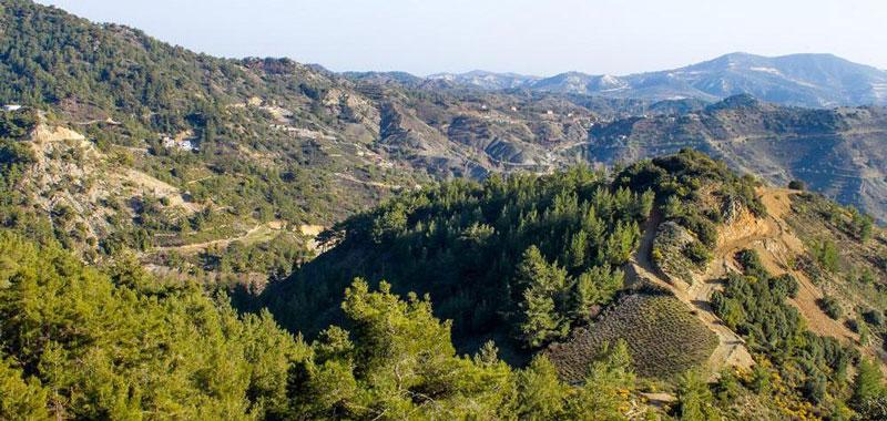 винодельни Троодос Кипр