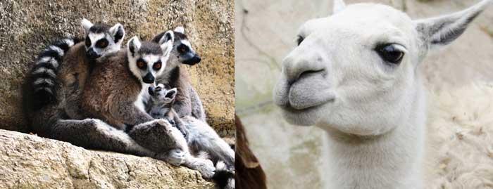 Самые интересные места в Лимассоле Зоопарк