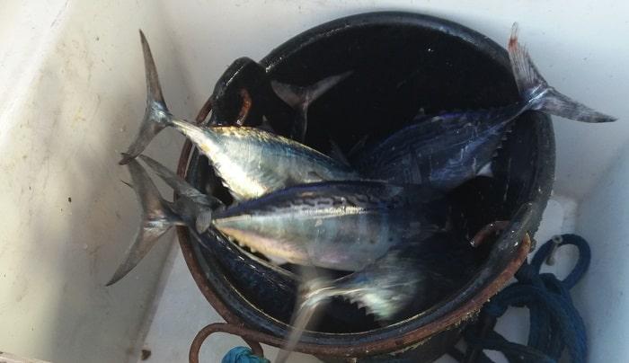 Рыбалка на яхте в Лимассоле