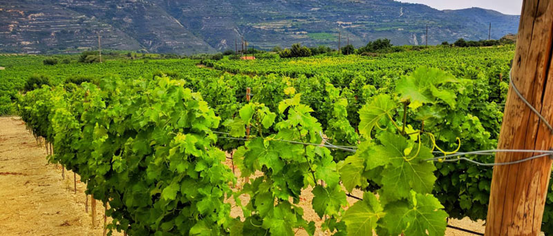 Экскурсия в Троодос по винодельням