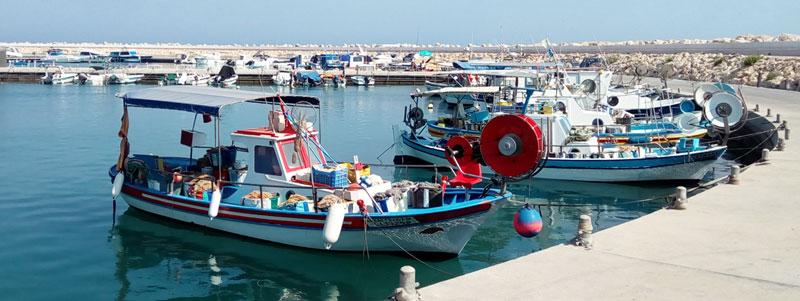 Кипр Зиги